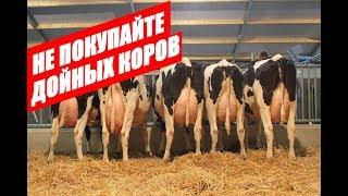Почему не стоит покупать дойных коров. КамАгро +79063333941