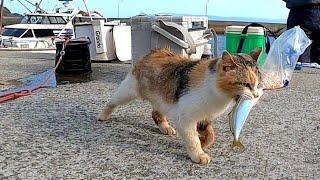 お魚くわえたドラ猫追っかけて