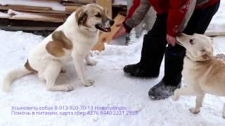 🐕🐾😄👍 Общение с собаками в приюте 🐕🐾😄👍 Приют Дари добро Новосибирск Communication with stray dogs