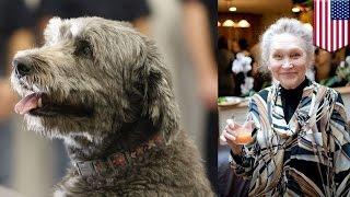 米ニューヨークに住む82歳のロシア人女性が愛犬に救われ、まるで「名犬...