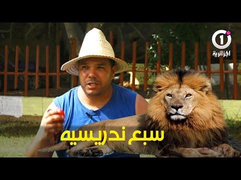 """أحسن مدرب الكلاب في الجزائر """"نقدر ندريسي  سبع"""""""
