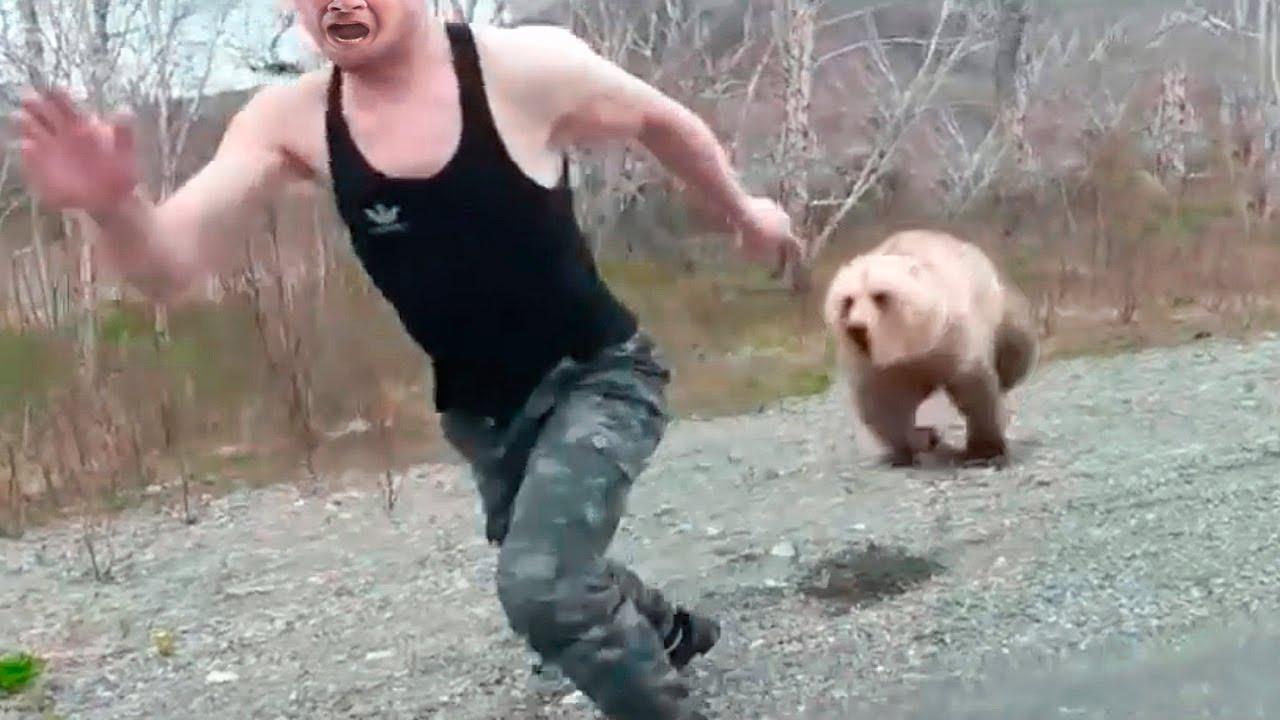Медведица полдня гоняла мужчину по тайге, и только когда он упал без сил, случилось невероятное