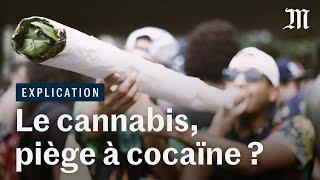 Fumer du cannabis : la porte vers la cocaïne ?