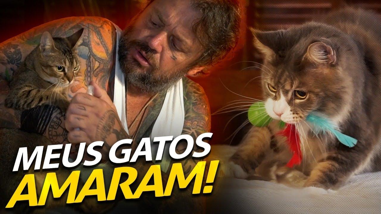 MEUS GATOS FICARAM ALUCINADOS COM OS NOVOS BRINQUEDOS! | A CASA DOS BICHOS