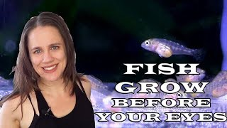 Watch fish grow before your eyes - Aulonocara Fry