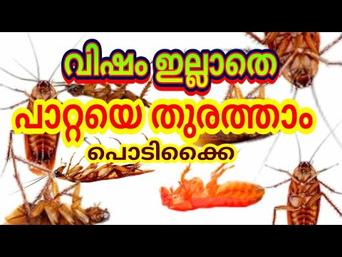 Cockroach How To Get Rid Of Cockroach With Killer Boric Powder | പാറ്റയെ തുരത്താൻ പൊടിക്കൈ