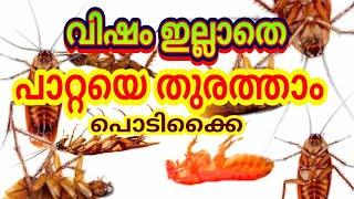 Cockroach How to get rid of Cockroach with Killer Boric Powder | പാറ്റയെ തുരത്താൻ പൊടിക്കൈ