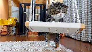 揺れてるブランコに乗るのはちょっと苦労しちゃうねこ。It is slightly hard that Maru gets on the swinging swing.