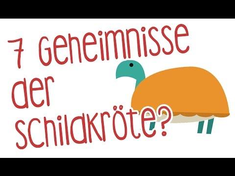 Die 7 Geheimnisse der Schildkröte: Den Alltag entschleunigen, das Leben entdecken YouTube Hörbuch Trailer auf Deutsch
