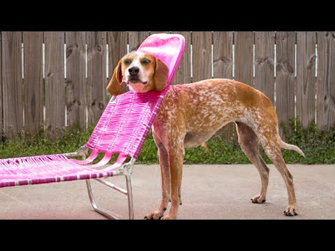 Awesome Funny  Dogs And Cats    Best Cute Animal Videos