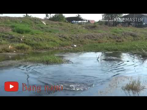 Spot Mancing Ikan Gabus