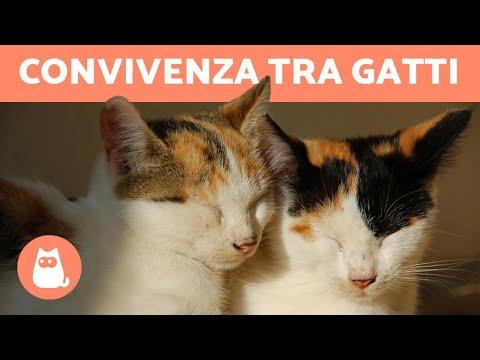 Convivenza tra gatti in casa - Come capire i gatti