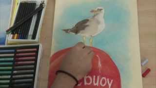 Art Lesson: How to create this Seagull Drawing with Pastels