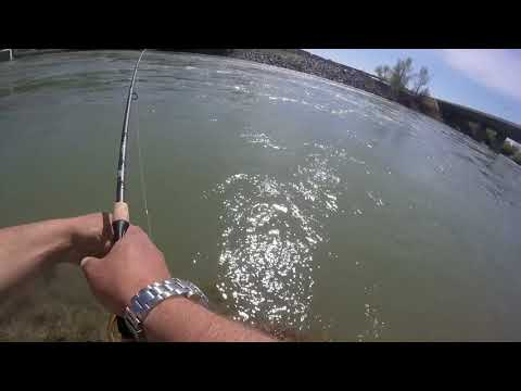 Bow River Trout Fishing. Calgary AB. High Flow & Big Trout Episode 2