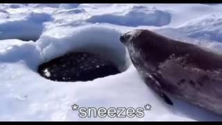 Captioned Seal (Sea Doggo)