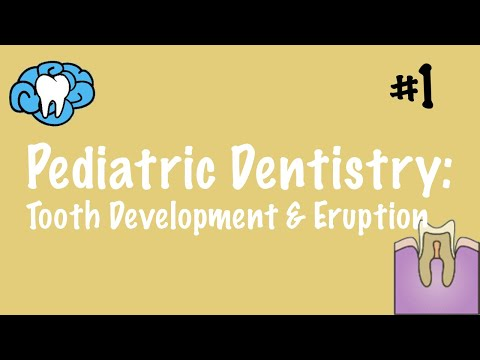 Pediatric Dentistry | Tooth Development And Eruption | NBDE Part II
