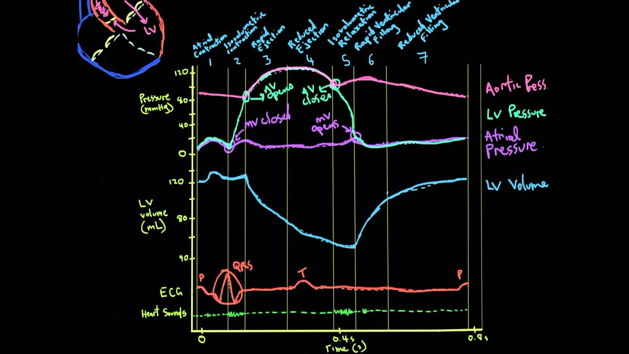 Khan Academy Vid 3: Volume, ECG, and Heart Sounds in the