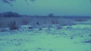 Timo Lige - Talvehommik