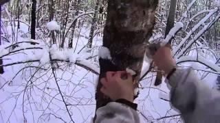Охота на куницу без собаки видео