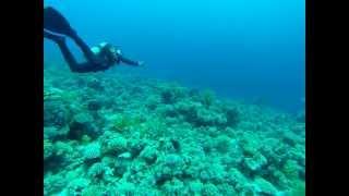 шарм эль шейх  акула видео