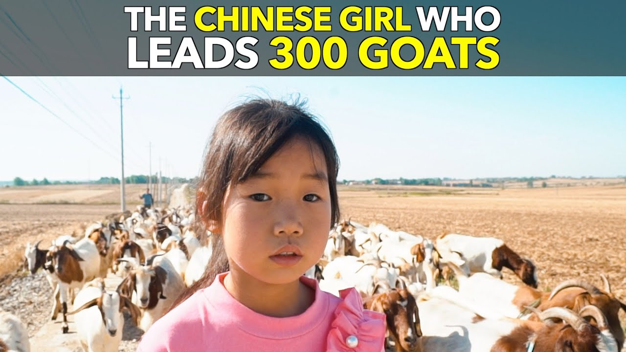 The Chinese Girl Who Leads 300 Goats