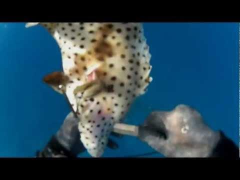 Diving Kakaako Oahu [Mystery Fish]