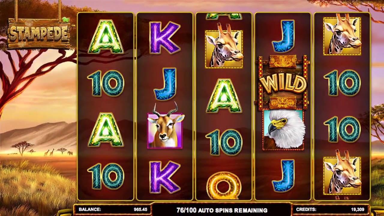 Игровой автомат safari heat novomatic картинки
