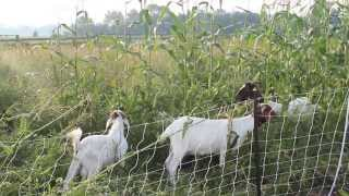 Semper Grazing Ranch - Demonstrating Electric Fencing