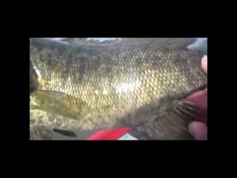 Kankakee river valley guide service heidecke lake multi for Heidecke lake fishing report