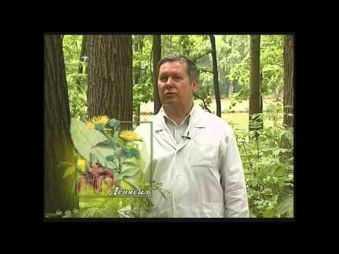 Лекарственные растения Урала (Фото)