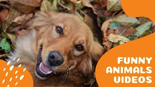 Best Funny Dogs And Cats Compilation 2020 (Part6) Animals Tiktok and Vine Videos-Try Not To Laugh