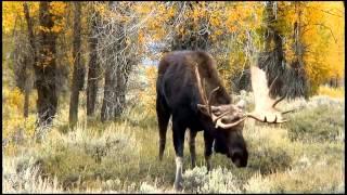 Repeat youtube video Flehmen Response - Animal Behaviour