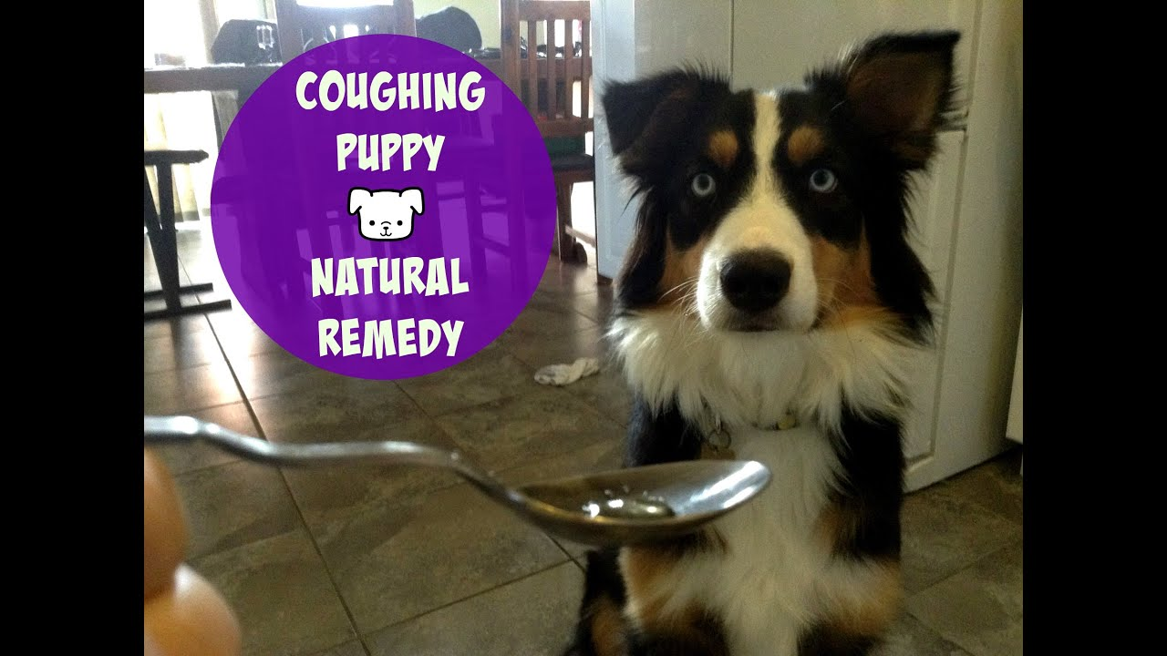 how to stop a dog from coughing with kennel cough