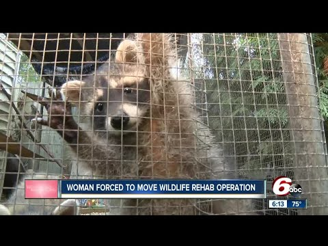 Woman forced to move wildlife rehab operation in Lebanon