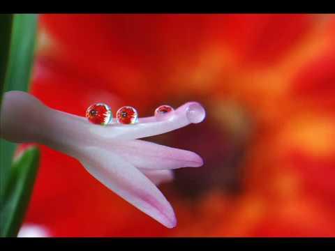Изумительные фото капель. Релакс.Amazing Drops .  Relax
