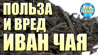 ПОЛЬЗА и ВРЕД ИВАН ЧАЯ !!!