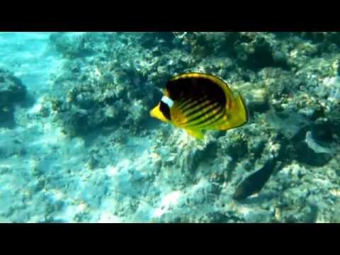 Sharm Dic. 2011 Pesci sulla barriera corallina.wmv