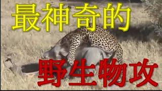 野生動物の本能 バトル戦 世界最大のヘビ 相互チャンネル登録 sub4sub ...