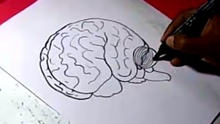 How to HUMAN BRAIN Drawing For Kids step by step