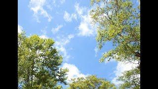 今まで撮った写真の中に、空や雲を撮ったものがそれなりにあったので、まとめてトワエモアの「空よ」の動画として使ってみました。青い空と...