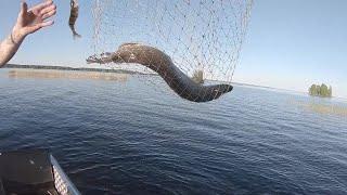 Рыбалка на троих Спиннинг Карелия Онежское озеро