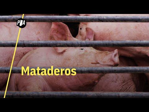 Van a los mataderos a despedirse de los animales