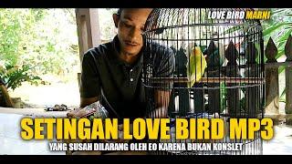 Cara Mencetak Love Bird MP3