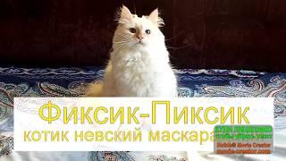 Рыжеухая красотулина - Невский маскарадный котенок Фиксик-Пиксик