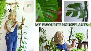 5 stunning indoor plants|Malayalam| Monstera, fittonia, zz plant and other beautiful house plants|