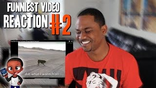 FUNNIEST VIDEO EVER | Reaction #2 (Dog Don
