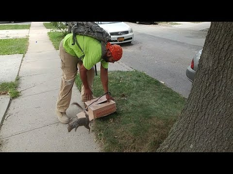 NYC CONSTRUCTION WORKERS SAVE SQUIRREL!!