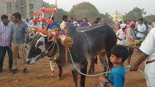 Bulls are pulling charriot in Madduramma Jathre in Huskur vill…