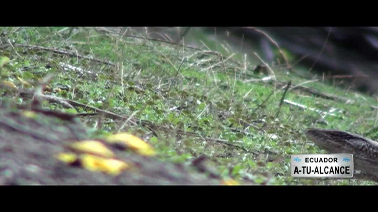 Florecimiento de Guayacanes, Loja - Ecuador a tu Alcance (parte 2)