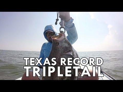 Texas Record Tripletail on Fly | Galveston, TX